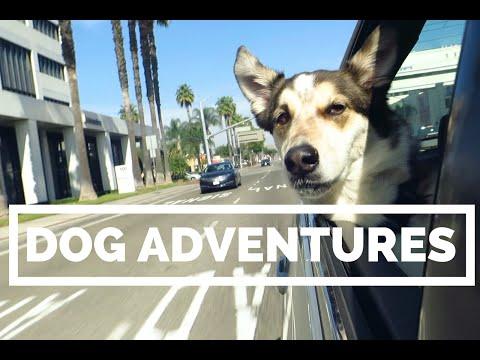VLOG No. 009   DOG ADVENTURES IN ORANGE COUNTY + VEGAN FOOD!