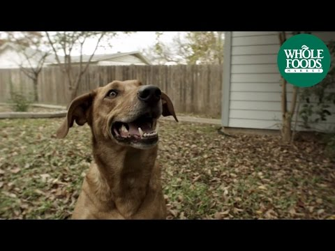 dog-food-l-tender-&-true-pet-food-|-whole-foods-market