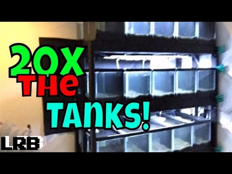 🔴 How I Setup My New Aquarium Tank Rack For  Plants, Fish, And Shrimp Breeding Live!