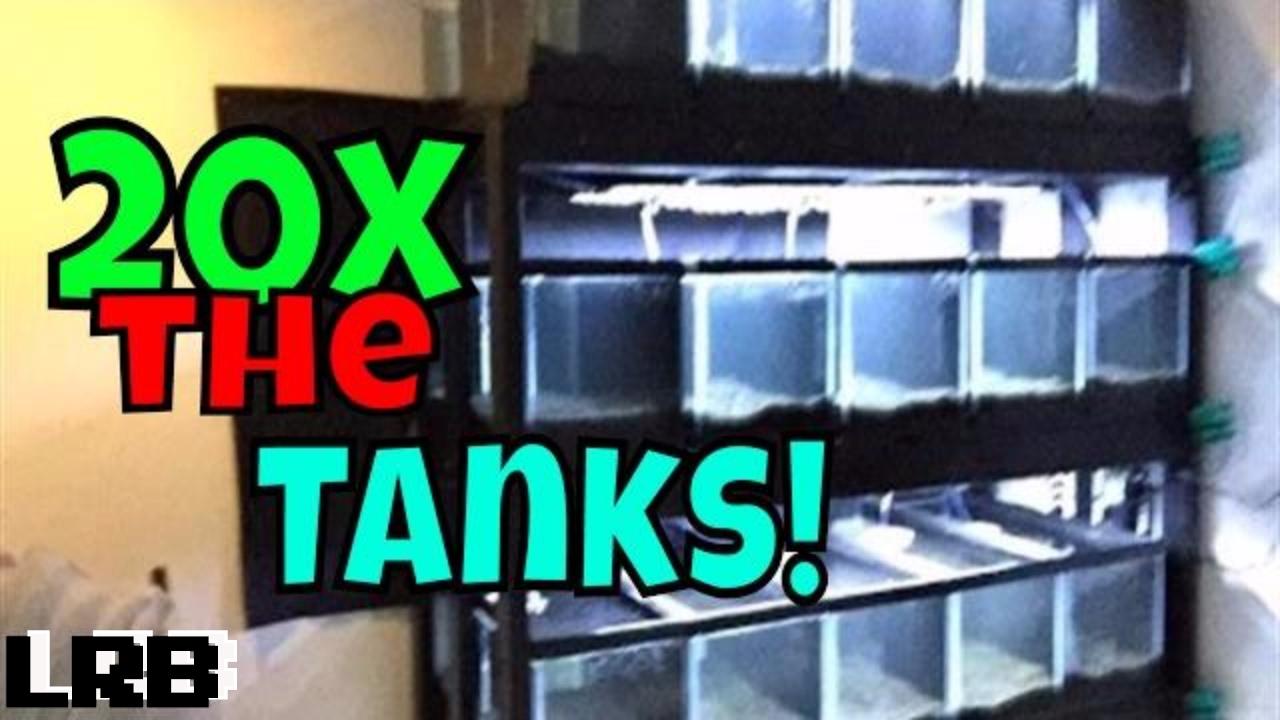 How I Setup My New Aquarium Tank Rack For Plants Fish