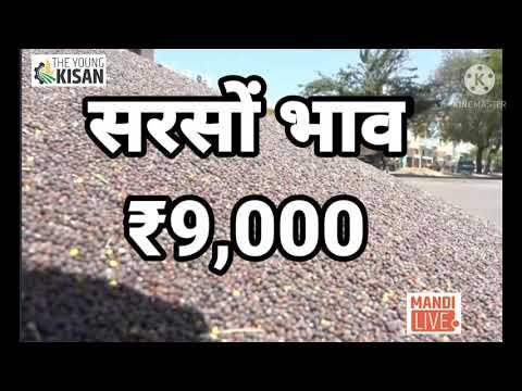 #सरसों भाव ₹10,000 पहुंचेंगे? #mustard #sarson #ncdex, sarson rate Today