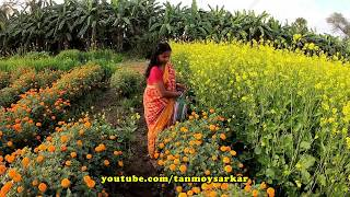 Beautiful Village Scenery Of Bengal | Phulia, Nadia District, West Bengal, India | Village In India
