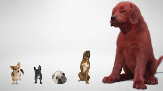 Clifford The Big Ręd Dog | First Look | In Theatres 2021