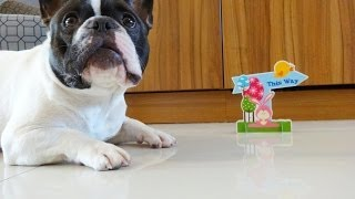 French Bulldog Easter Movie