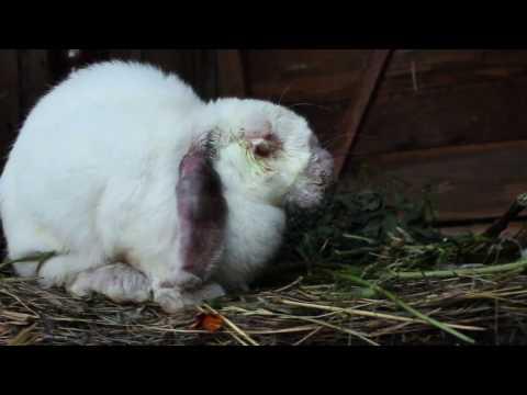 Чем болеют кролики и чем лечить