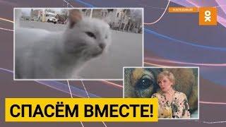 Защита животных в Беларуси: закон, волонтёры и воспитание
