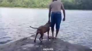 Sahibi Göle Atlayınca Ağlayan Köpek..