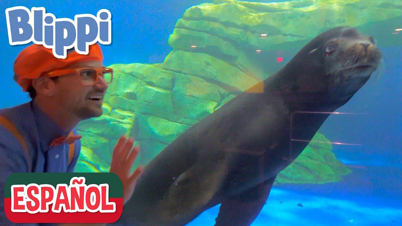 🐟 Canción del acuario 🐟 | Canciones para niños | Canciones educativas
