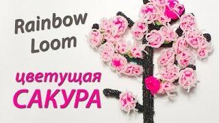 Цветущая Сакура (японская вишня) из Rainbow Loom Bands. Урок 59(Купить наборы для плетения: http://myloom.ru/ Посмотрев этот видеоурок, вы узнаете, как сделать цветущее дерево..., 2014-09-15T18:33:29.000Z)