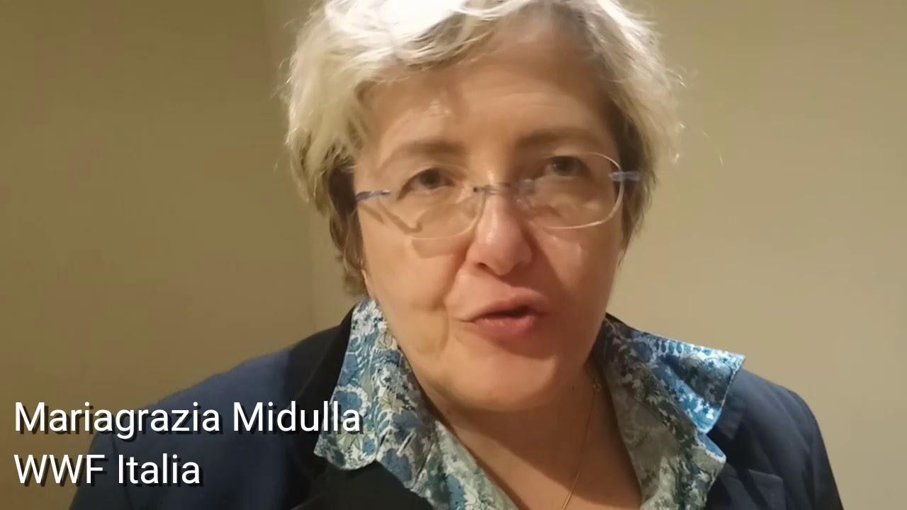 Mariagrazia Midulla, WWF Italia - La decarbonizzazione in Italia - YouTube
