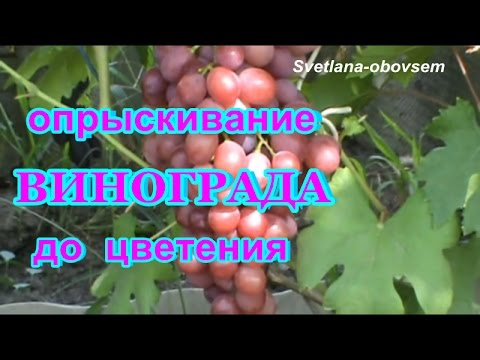 болезни винограда