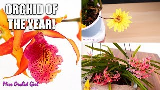 Orchid of the Year 2019! - Time for the final vote!