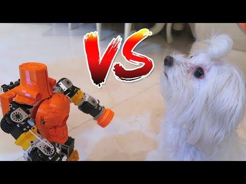 Perro vs Robot
