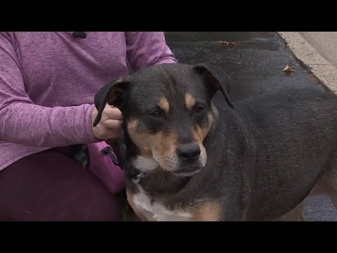 Dog saves Virginia woman from fire