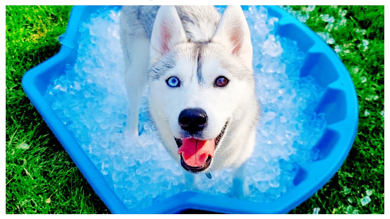 HUSKY Gets Her Own Ice Pool for the FIRST Time!