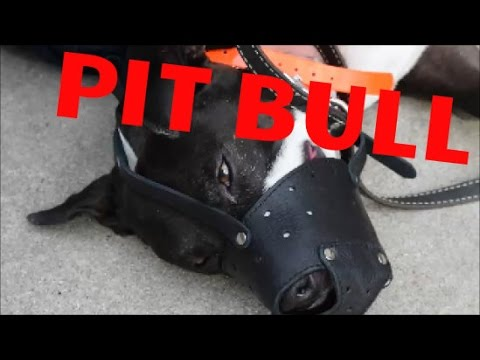 Raging Pit Bull - Dog Whisperer BIG CHUCK MCBRIDE - k9busters.com or safecalm.com