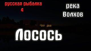 Русская рыбалка 4 рр4 rf4 река Волхов Лосось
