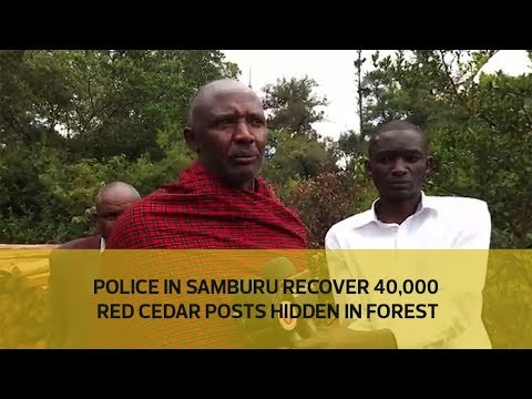 Police in Samburu recover 40,000 red cedar posts hidden in forest