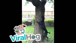 Dog and Squirrel Play Chase Around a Tree || ViralHog