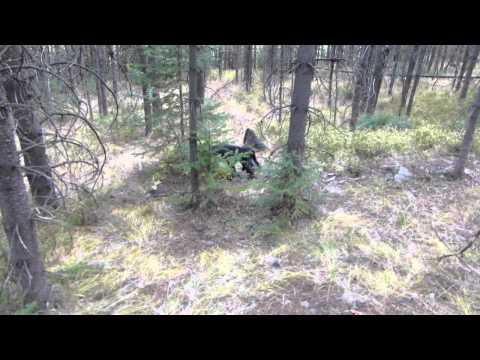 field bred english cocker spaniel first retrieve