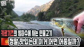 키르기스스탄의 빙하수에 사는 민물고기 정말 맛있는데 이거 어떤 어종일까요? (우즈벡 우즈베키스탄 국제커플)