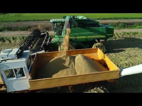 Rice Harvest 2019 – Drone Video