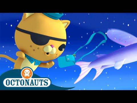Octonauts - School of Flying Fish   Cartoons for Kids   Underwater Sea Education