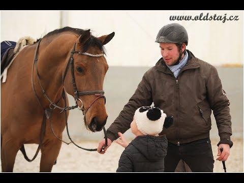 1.35+ JUMPER FOR SALE: Fernando, 2010, Vigaro x Landadel, training 03-18