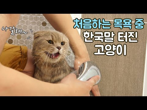 Iz the cat started to speak Korean during taking a bath for the first time