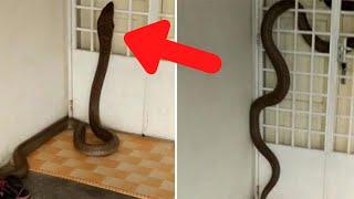 10 Grootste Slangen Ooit Gevonden!