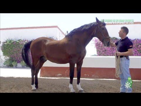 todocaballo-|-los-caballos-de-picar-y-los-campeones-de-la-yeguada-cárdenas
