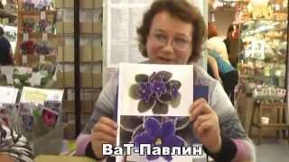 ДФ. Сенполии: селекция Татьяны Вальковой.