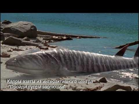 Пандерихтис Panderichthys