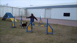 Manny agility training april 2013 Thumbnail