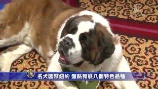 名犬汇聚纽约盘点狗展八个特色品种来源:http://www.ntdtv.com/xtr/gb/2...