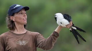 BirdChat: Swallow tailed Kites and Short tailed Hawks with Gina Kent 9 -24-20
