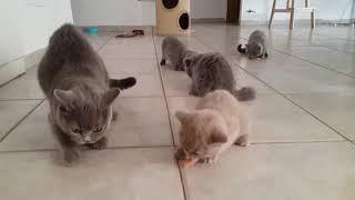 Кошка с котятами едят сырое мясо