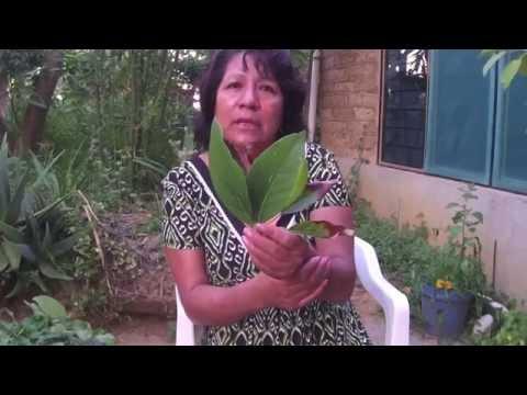 Virginia Martínez Pérez medicinal plants Part 2 / plantas medicinales, Parte 2