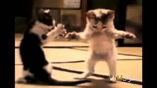 اغنيه لاطفال هههههه 😸 القطه تركص