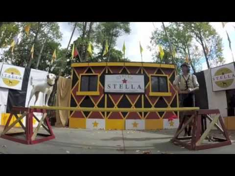 Circus Stella's Rescue Dog Act 2014