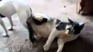 Repeat youtube video perro pegado con gata.