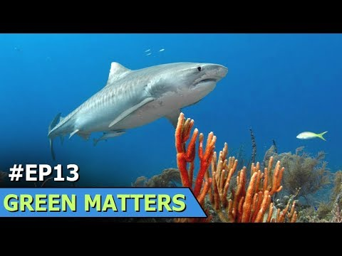 Costa Rica Solar Ovens | Coral Sea Sharks | Green Matters | Episode 13