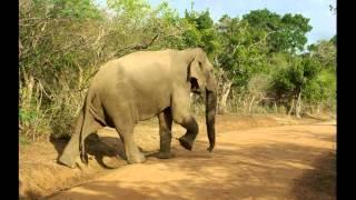 Ceylon / Sri Lanka - Yala National Park