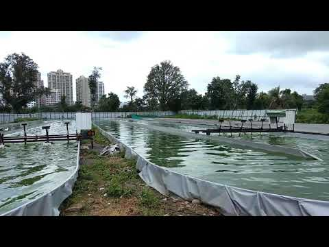 Spirulina Cultivation in Maharashtra (Pune)