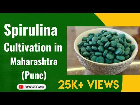 Spirulina Cultivation, Production in Maharashtra (Pune)