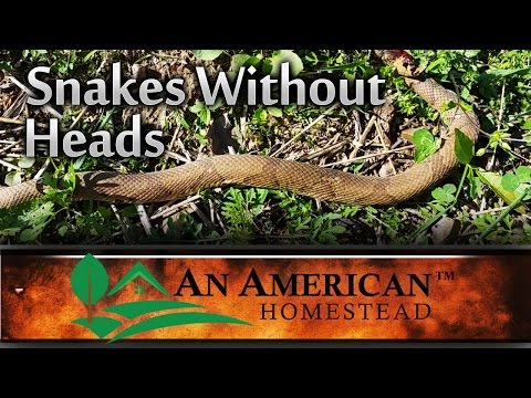 Snakes Without Heads - An American Homestead