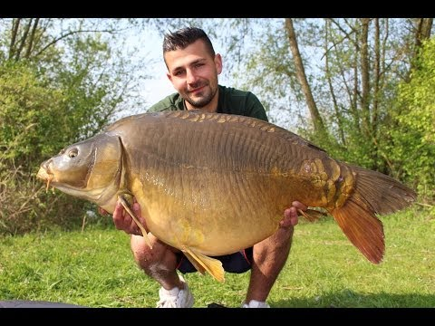 Carp fishing with bread 39 popped up bread 39 funnycat tv for Fishing with bread