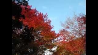 【東京都庭園美術館(旧朝香宮邸)】