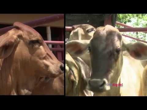 Suganet, una aplicación para compra y venta de ganado C7 – N1