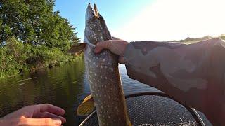 Рыбалка На Утренней Зорьке На Спиннинг Щука Судак Окунь Удачная рыбалка 2020